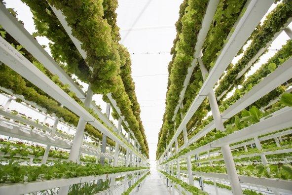 Vertical Farming   Increase Cannabis Yields   GrowHigher